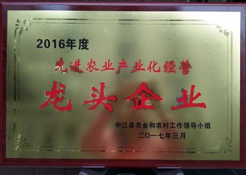 县龙头企业2016